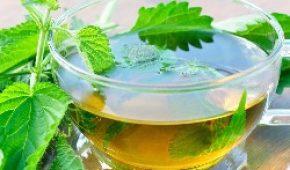 Миниатюра к статье Лечение геморроя крапивой — рецепты настоев и отваров